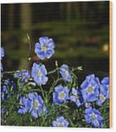 Blue Flax By The Pond Wood Print