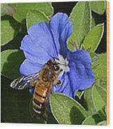 Blue Flower Bumblebee Wood Print