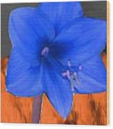 Blue Flower In The Fall At Night Wood Print