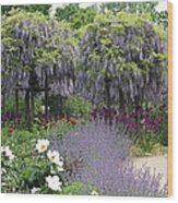 Blue Flowergarden With Wisteria Wood Print