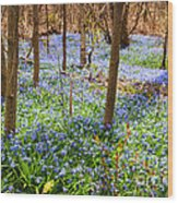 Blue Flowers In Spring Forest Wood Print