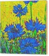 Blue Flowers - Wild Cornflowers In Sunlight  Wood Print