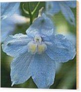 Blue Fragil Wood Print