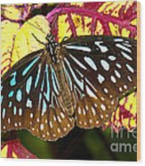 Blue Glassy Tiger Butterfly Wood Print