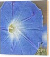 Blue Glories Wood Print