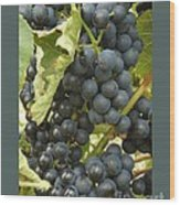 Blue Grapes Wood Print by Patricia Overmoyer