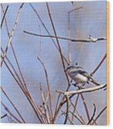 Blue-gray Gnatcatcher Wood Print