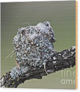 Blue-gray Gnatcatcher Nest Wood Print