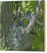 Blue-gray Gnatcatcher Nest Dsb261 Wood Print