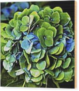 Blue Green Hydrangea Wood Print