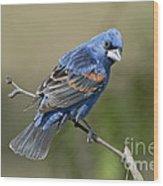 Blue Grosbeak Wood Print