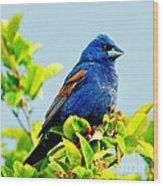 Blue Grosbeak On The Look Out Wood Print