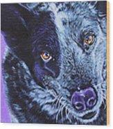 Blue Heeler Wood Print