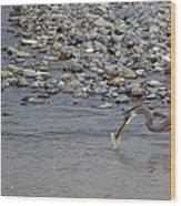 Blue Heron And Fish   #9619 Wood Print