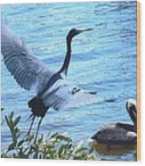 Blue Heron And Pelican Wood Print