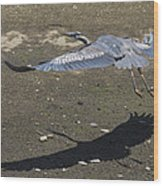 Blue Heron And Shadow Wood Print