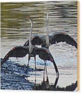 Great Blue Heron Ballet Wood Print