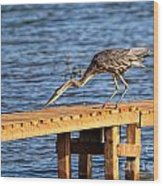 Blue Heron Dragonfly Lunch Wood Print
