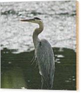 Fishing On The Quinnebaug Wood Print