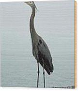 Blue Heron Fulton Harbor Tx Wood Print