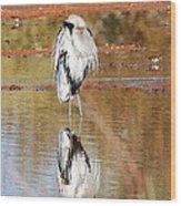 Blue Heron Grooming Wood Print
