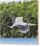 Blue Heron In Flight II Wood Print