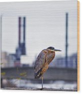 Blue Heron In Manayunk Wood Print