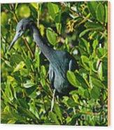 Blue Heron In Mangroves Wood Print