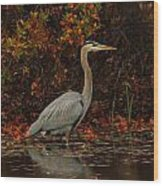 Blue Heron In The Fall Wood Print