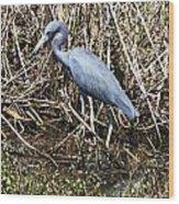 Blue Heron Lacassine Wood Print