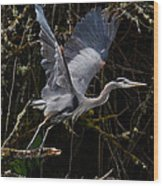Blue Heron Lift Off Wood Print