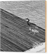 Blue Heron On Dock - Grayscale Wood Print