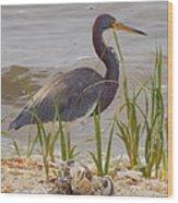 Blue Heron On Oyster Shell Beach Wood Print