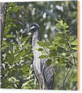 Blue Heron Profile Wood Print