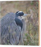Blue Heron Reflecting Wood Print