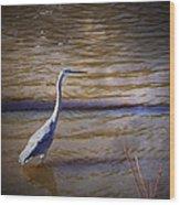 Blue Heron - Shallow Water Wood Print