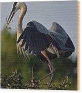Blue Heron Wing Tips Wood Print