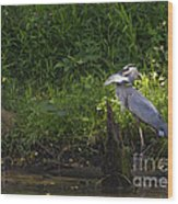Blue Heron With A Fish-signed Wood Print