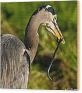 Blue Heron With A Snake In Its Bill Wood Print