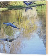 Blue Herons On Golden Pond Wood Print