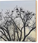 Blue Herons Wood Print