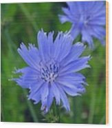 Blue Hue Hue Wood Print