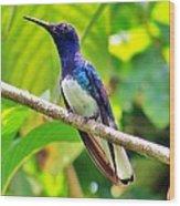 Blue Humming Bird Wood Print