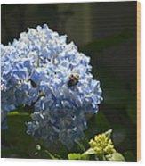 Blue Hydrangea With Bumblebee Wood Print