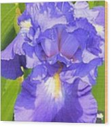 blue Iris Wood Print by Claudette Bujold-Poirier