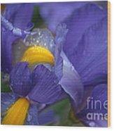 Blue Iris Close Up Wood Print