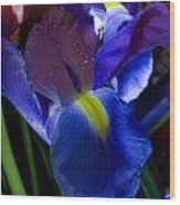 Blue Iris Wood Print by Joann Vitali