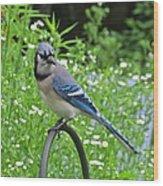 Blue Jay 105 Wood Print