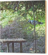 Blue Jay At Lunch Wood Print