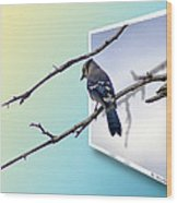 Blue Jay Branch Wood Print